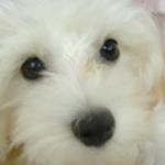 らんちゃんさんのプロフィール画像