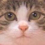 ミニチョコさんのプロフィール画像