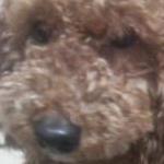 モカシュナさんのプロフィール画像