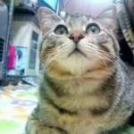 ぐれこ☆さんのプロフィール画像