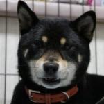 silchiさんのプロフィール画像