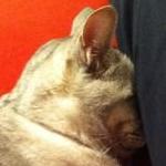 kikiさんのプロフィール画像