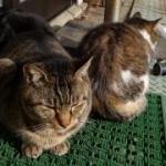 のび猫さんのプロフィール画像