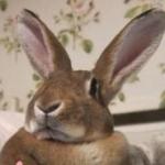 ぴわびさんのプロフィール画像