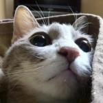 メネさんのプロフィール画像