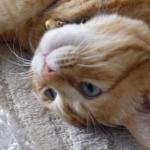 ぷち丸2さんのプロフィール画像