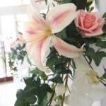 桃子さんのプロフィール画像