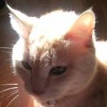 トラ猫みぃさんのプロフィール画像