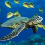gutsy turtle