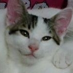 ふにoさんのプロフィール画像