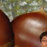 榮太郎さんのプロフィール画像