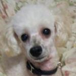 prinさんのプロフィール画像
