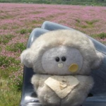 usagiさんのプロフィール画像