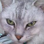 モモコさんのプロフィール画像