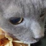 MIHO DAIJOさんのプロフィール画像