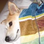 mareamさんのプロフィール画像