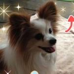 KEIKAさんのプロフィール画像