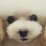 micchiさんのプロフィール画像