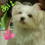 erinkoさんのプロフィール画像