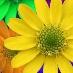 Parvathi さんのプロフィール画像