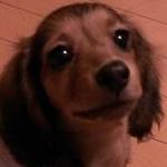 mi poppoさんのプロフィール画像