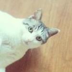 ナフサさんのプロフィール画像