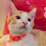 leoxpiyoさんのプロフィール画像