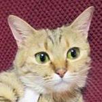hamuhamuさんのプロフィール画像