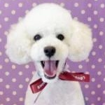 kihoさんのプロフィール画像