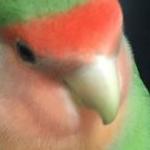 pochisukeさんのプロフィール画像