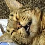 にゃんびびさんのプロフィール画像