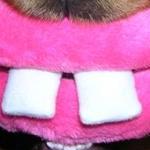inakaさんのプロフィール画像