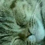しーちゃんのママ@美容マニアさんのプロフィール画像