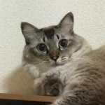 ともみんさんのプロフィール画像