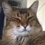 sabon2016さんのプロフィール画像