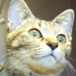 猫田コツブさんのプロフィール画像
