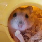 chinamiさんのプロフィール画像