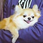 キンキキさんのプロフィール画像