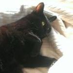 安中の黒猫
