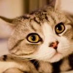 sasaさんのプロフィール画像