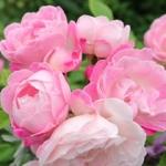 花♪さんのプロフィール画像