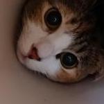 晃さんのプロフィール画像