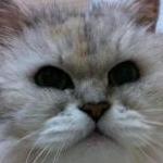 meronさんのプロフィール画像
