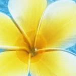 プルメリアさんのプロフィール画像