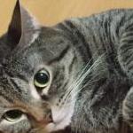 ラン子さんのプロフィール画像