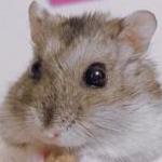 nerumugiさんのプロフィール画像