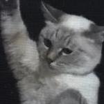 love phantom…さんのプロフィール画像
