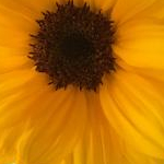 chariさんのプロフィール画像