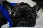 bubuさんのプロフィール画像