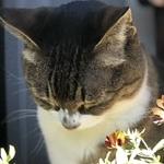 キジコさんのプロフィール画像